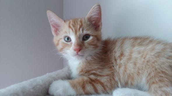Logan kitten