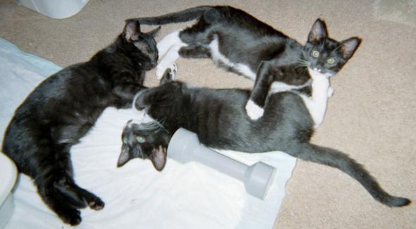 Spot, Truffle, & Smudge kitten